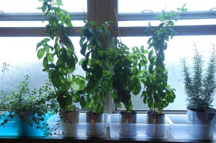 cropped-cropped-cropped-window-garden-21.jpg