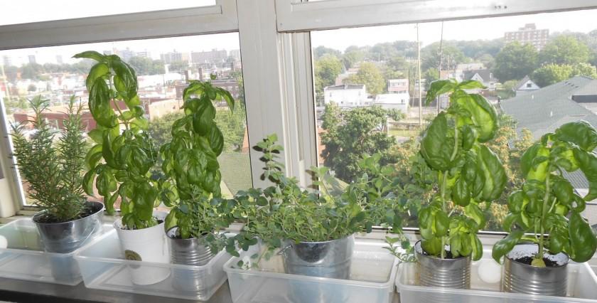cropped-cropped-cropped-window-garden-b-e1411319401204.jpg